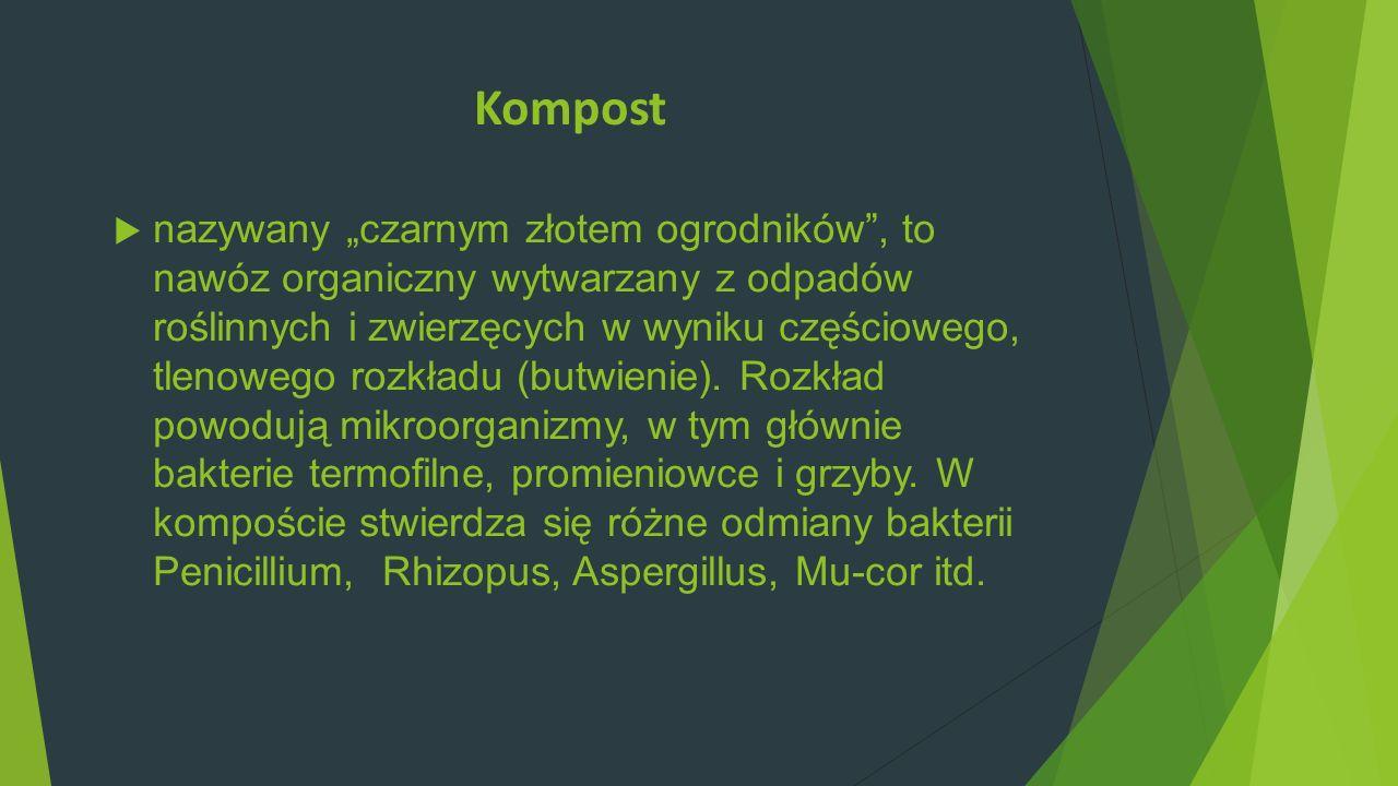 Kompost nazywany czarnym złotem ogrodników, to nawóz organiczny wytwarzany z odpadów roślinnych i zwierzęcych w wyniku częściowego, tlenowego rozkładu