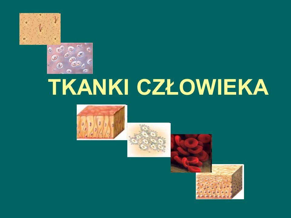HISTOLOGIA – nauka o tkankach TKANKA - zespół komórek o podobnej budowie, określonych czynnościach, wspólnym pochodzeniu, przystosowanych do wykonywania określonej funkcji na rzecz całego organizmu.