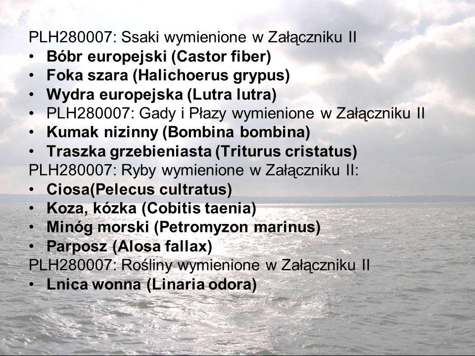 PLH280007: Ssaki wymienione w Załączniku II Bóbr europejski (Castor fiber) Foka szara (Halichoerus grypus) Wydra europejska (Lutra lutra) PLH280007: Gady i Płazy wymienione w Załączniku II Kumak nizinny (Bombina bombina) Traszka grzebieniasta (Triturus cristatus) PLH280007: Ryby wymienione w Załączniku II: Ciosa(Pelecus cultratus) Koza, kózka (Cobitis taenia) Minóg morski (Petromyzon marinus) Parposz (Alosa fallax) PLH280007: Rośliny wymienione w Załączniku II Lnica wonna (Linaria odora)