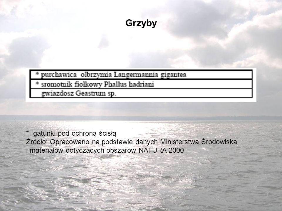 Grzyby *- gatunki pod ochroną ścisłą Źródło: Opracowano na podstawie danych Ministerstwa Środowiska i materiałów dotyczących obszarów NATURA 2000