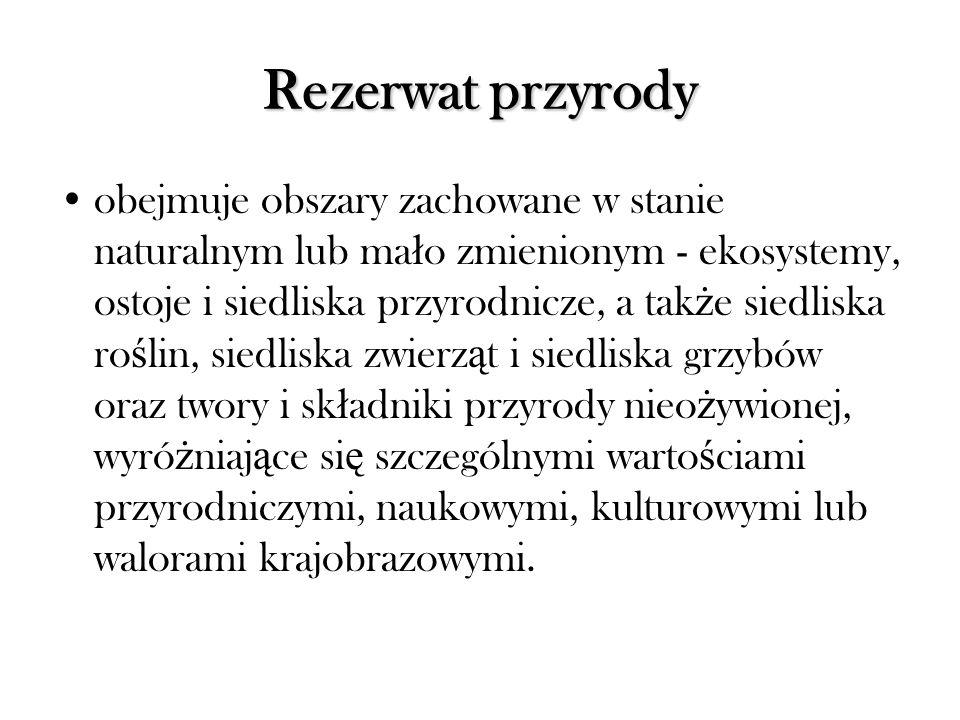 Aleja Lipowa Nasutów - Dys - Pólko