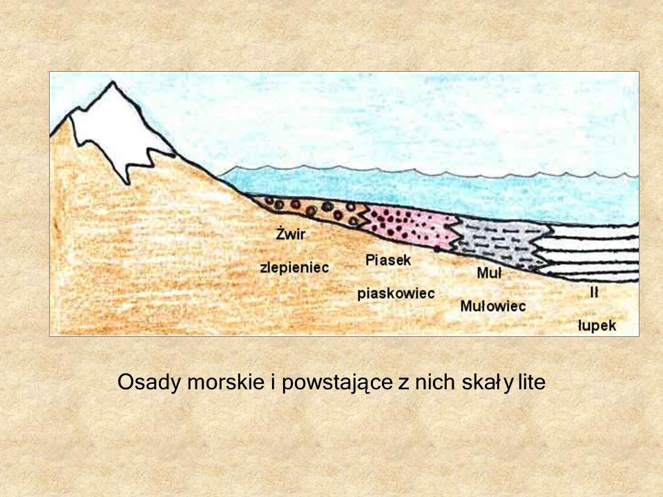 Osady morskie i powstające z nich skały lite