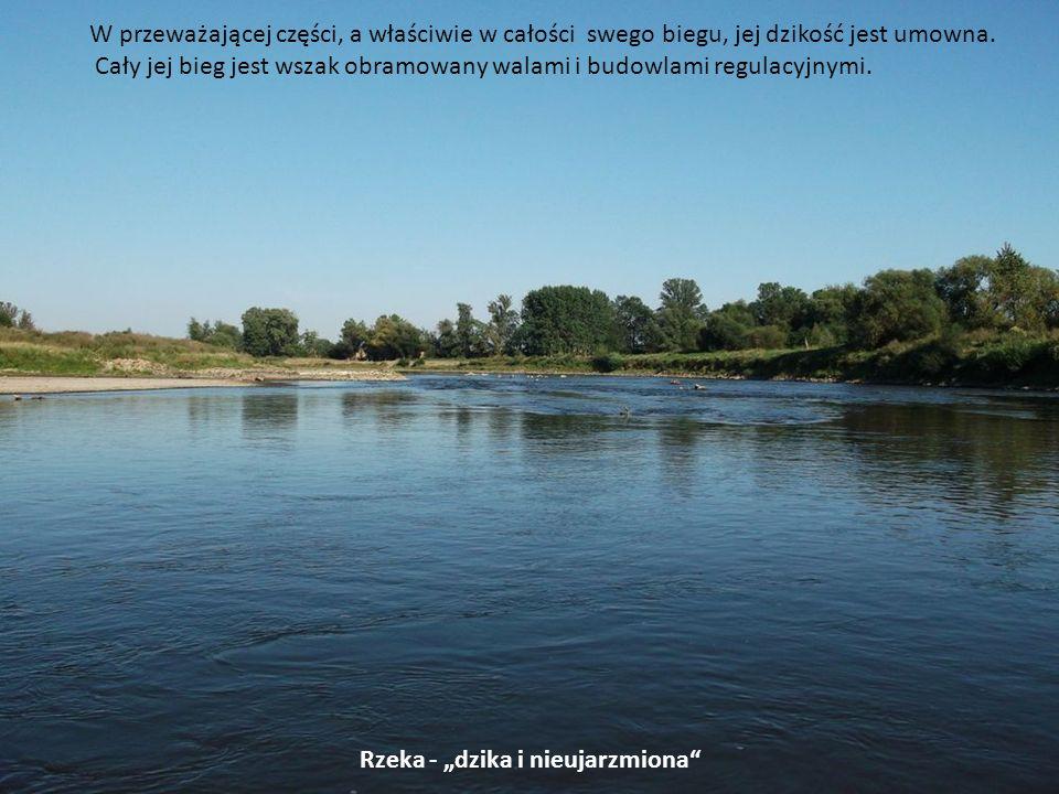 Rzeka - dzika i nieujarzmiona W przeważającej części, a właściwie w całości swego biegu, jej dzikość jest umowna. Cały jej bieg jest wszak obramowany
