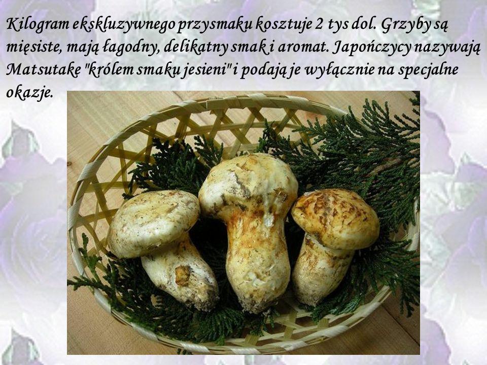 Grzyby Matsutake Grzyby jako takie od wieków są ważną częścią kuchni japońskiej. Do najcenniejszych należy odmiana Matsutake, spotykana też w Korei, C