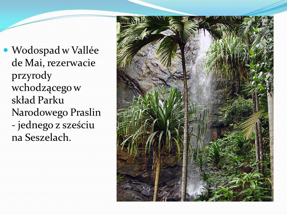 Wodospad w Vallée de Mai, rezerwacie przyrody wchodzącego w skład Parku Narodowego Praslin - jednego z sześciu na Seszelach.