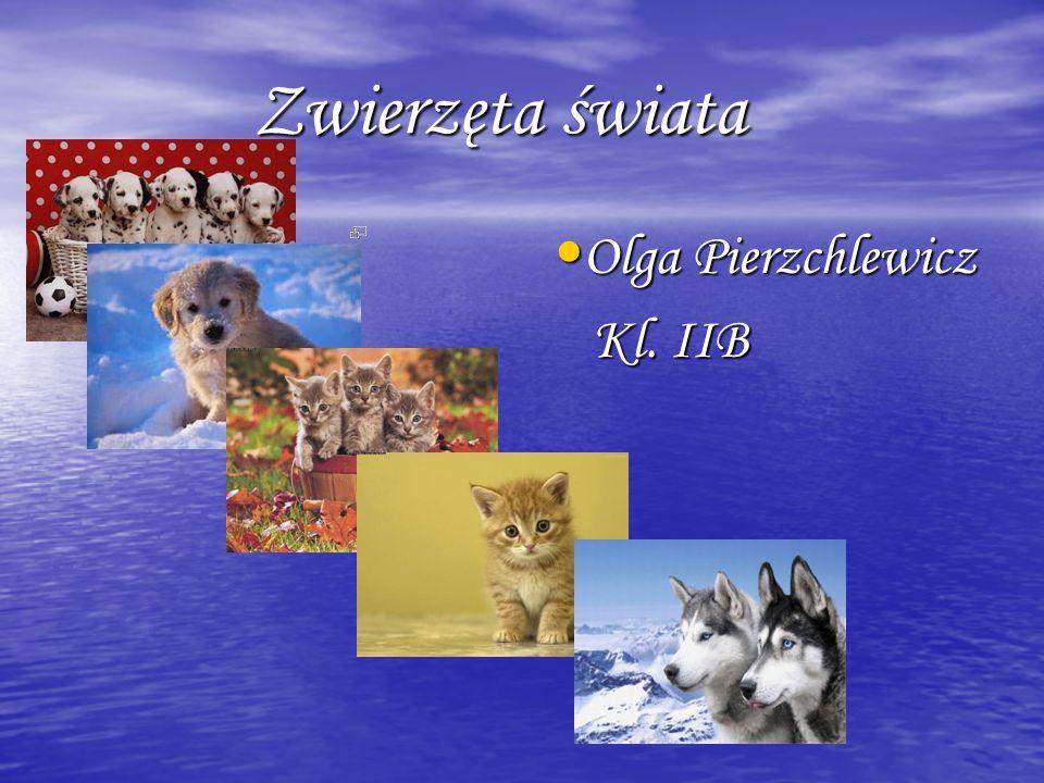 Zwierzęta świata Zwierzęta świata Olga Pierzchlewicz Olga Pierzchlewicz Kl. IIB Kl. IIB