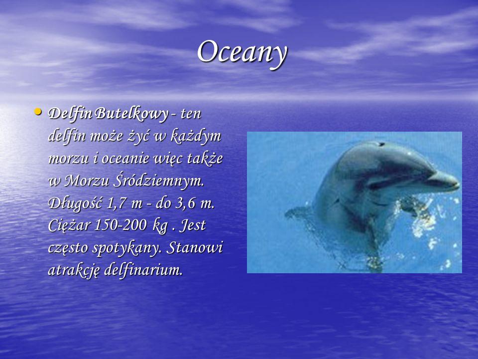 Oceany Oceany Delfin Butelkowy - ten delfin może żyć w każdym morzu i oceanie więc także w Morzu Śródziemnym. Długość 1,7 m - do 3,6 m. Ciężar 150-200