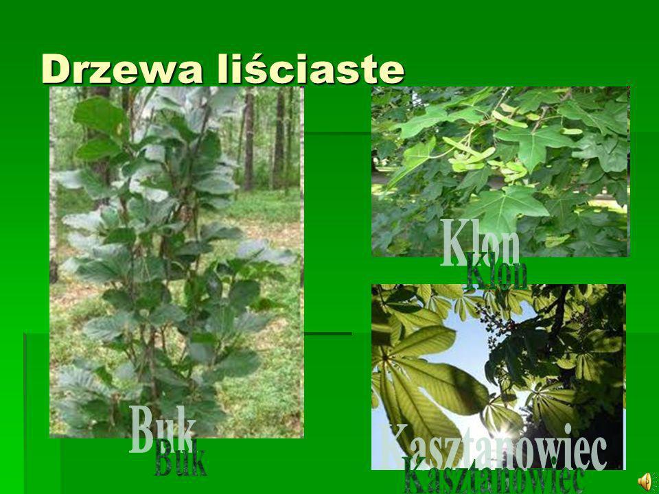 Buk – rodzaj drzew z rodziny bukowatych obejmujący 9–10 gatunków.