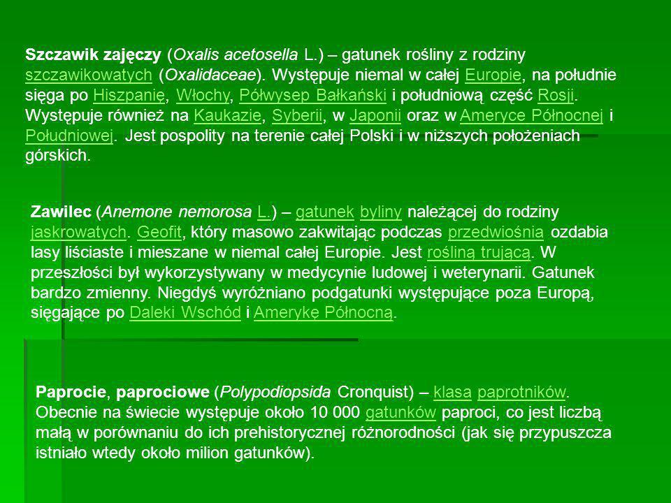 Szczawik zajęczy (Oxalis acetosella L.) – gatunek rośliny z rodziny szczawikowatych (Oxalidaceae). Występuje niemal w całej Europie, na południe sięga