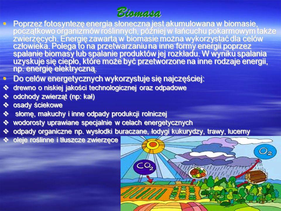 Biomasa Poprzez fotosyntezę energia słoneczna jest akumulowana w biomasie, początkowo organizmów roślinnych, później w łańcuchu pokarmowym także zwier