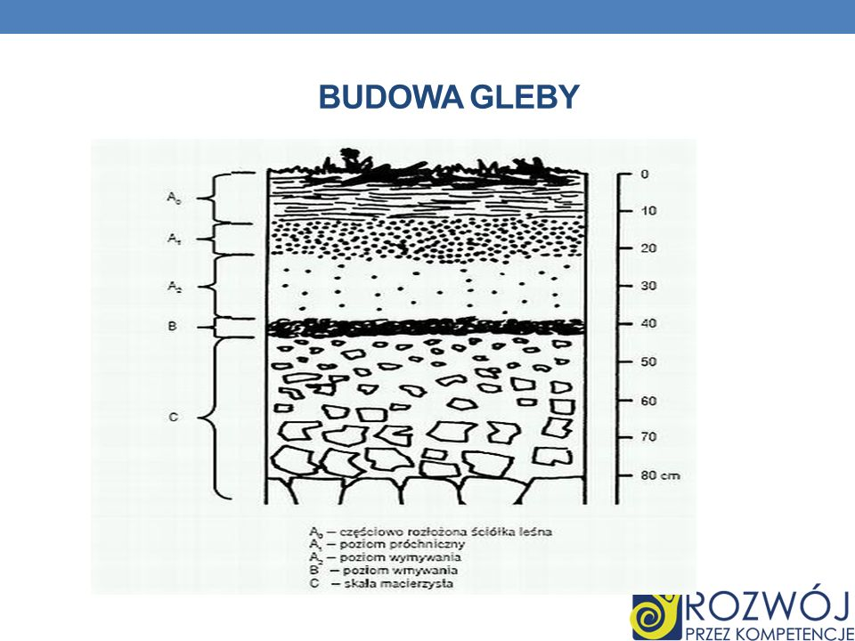 BUDOWA GLEBY