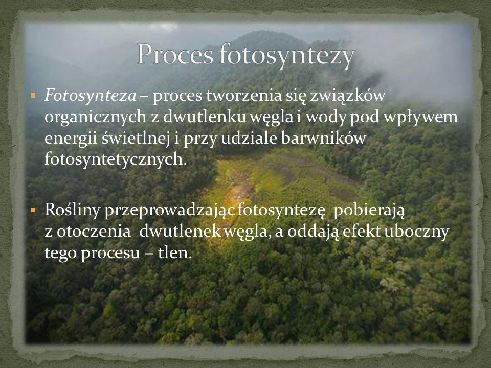 Fotosynteza – proces tworzenia się związków organicznych z dwutlenku węgla i wody pod wpływem energii świetlnej i przy udziale barwników fotosyntetycz