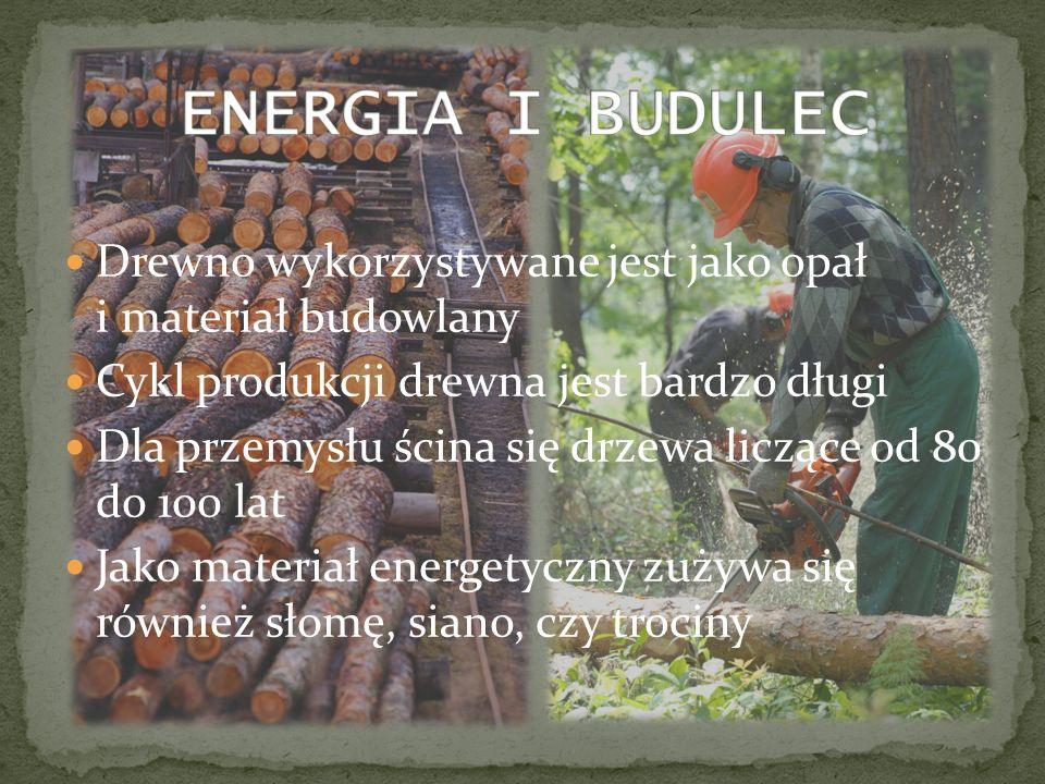 Drewno wykorzystywane jest jako opał i materiał budowlany Cykl produkcji drewna jest bardzo długi Dla przemysłu ścina się drzewa liczące od 80 do 100