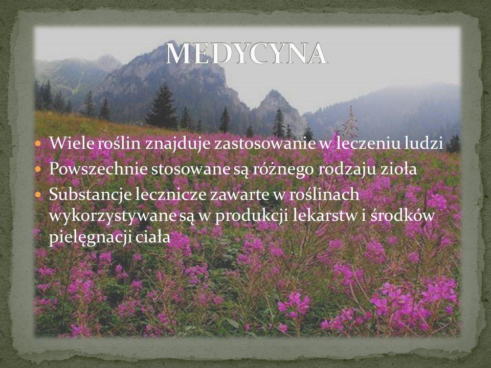 Wiele roślin znajduje zastosowanie w leczeniu ludzi Powszechnie stosowane są różnego rodzaju zioła Substancje lecznicze zawarte w roślinach wykorzysty