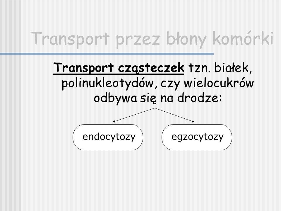 Transport przez błony komórki Transport cząsteczek tzn. białek, polinukleotydów, czy wielocukrów odbywa się na drodze: endocytozyegzocytozy