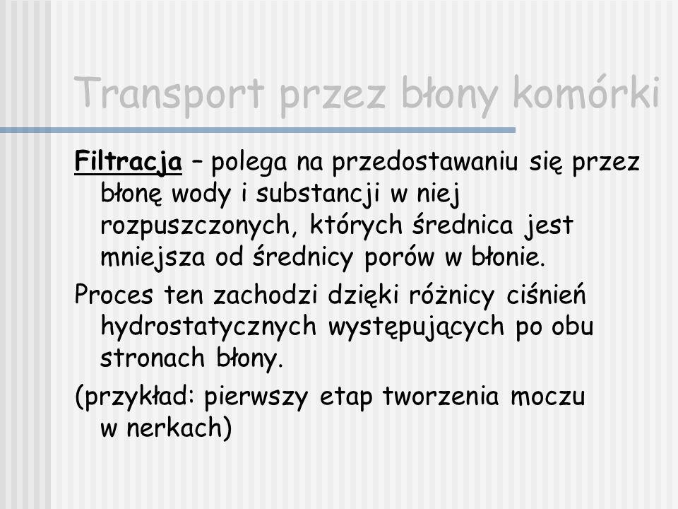 Transport przez błony komórki Filtracja – polega na przedostawaniu się przez błonę wody i substancji w niej rozpuszczonych, których średnica jest mnie