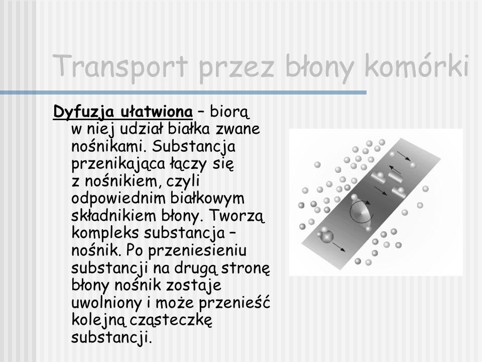 Transport przez błony komórki Dyfuzja ułatwiona – biorą w niej udział białka zwane nośnikami. Substancja przenikająca łączy się z nośnikiem, czyli odp