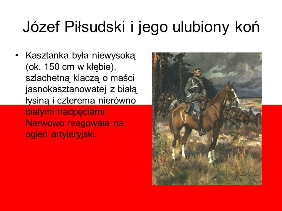 Józef Piłsudski i jego ulubiony koń Kasztanka była niewysoką (ok. 150 cm w kłębie), szlachetną klaczą o maści jasnokasztanowatej z białą łysiną i czte