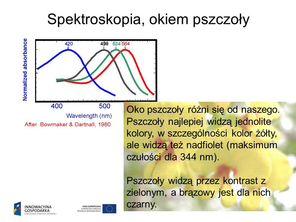Spektroskopia, okiem pszczoły Oko pszczoły różni się od naszego.