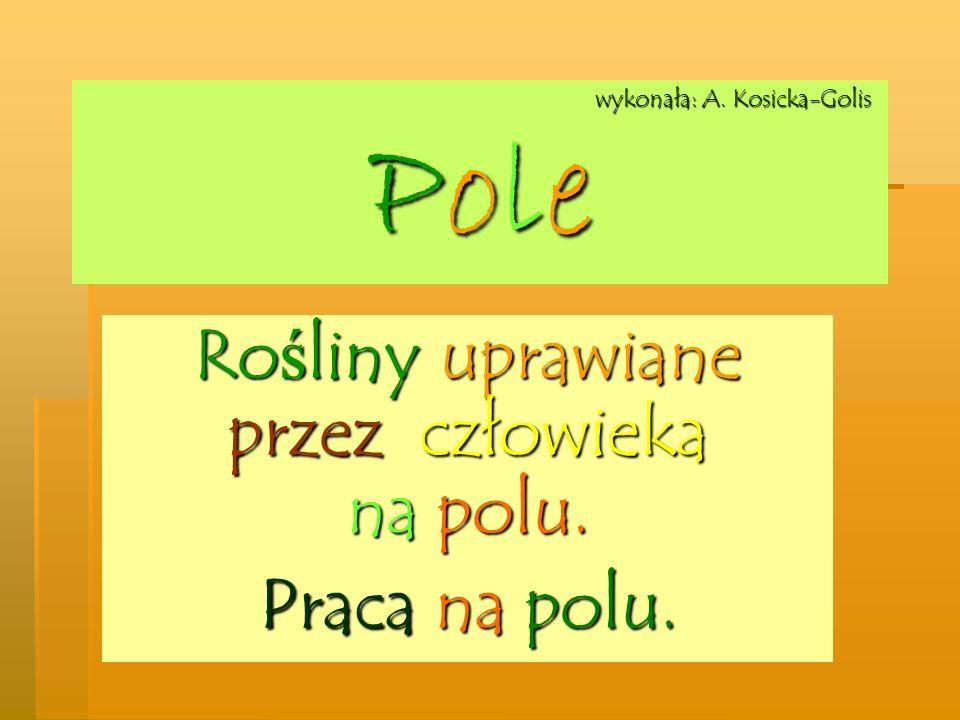 wykonała: A. Kosicka-Golis Pole wykonała: A. Kosicka-Golis Pole Rośliny uprawiane przez człowieka na polu. Praca na polu.