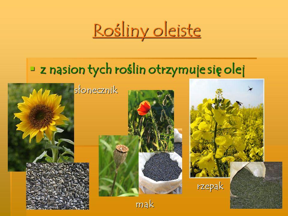Rośliny oleiste z nasion tych roślin otrzymuje się olej słonecznik mak rzepak