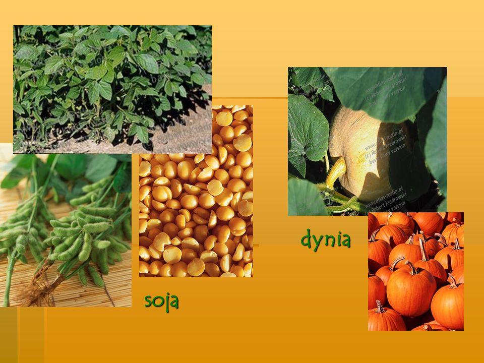 Rośliny włókniste to takie rośliny, które w łodygach mają włókna, wytwarza się z nich nici i sznury len konopie