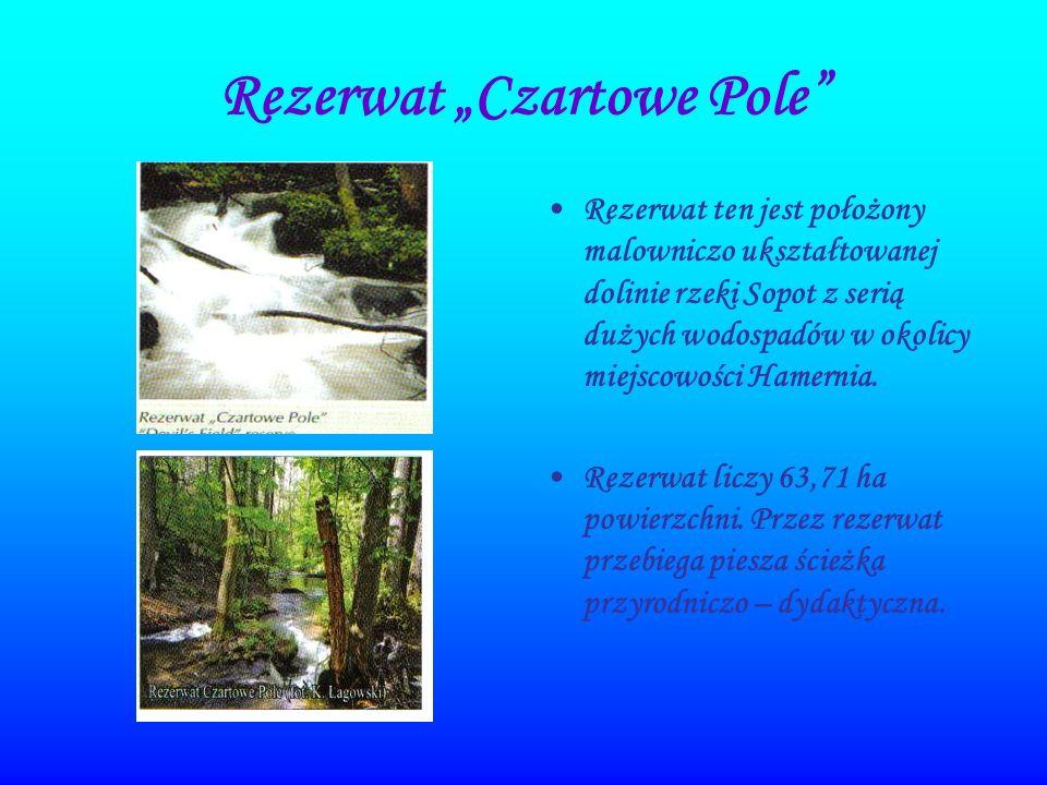 Rezerwat Czartowe Pole Rezerwat ten jest położony malowniczo ukształtowanej dolinie rzeki Sopot z serią dużych wodospadów w okolicy miejscowości Hamer