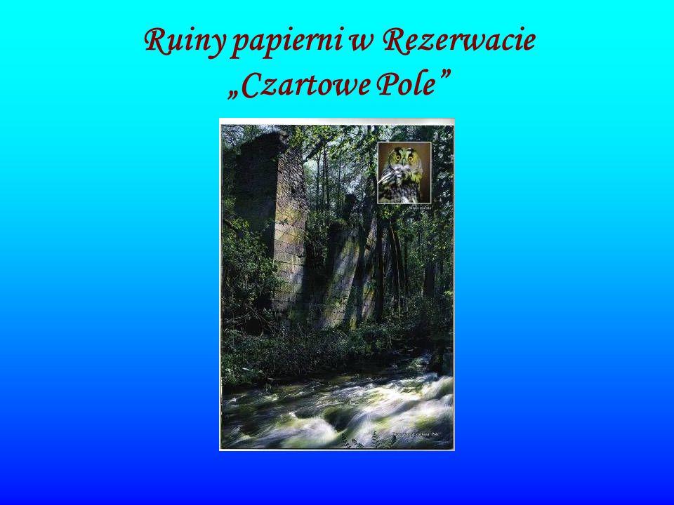 Ruiny papierni w Rezerwacie Czartowe Pole