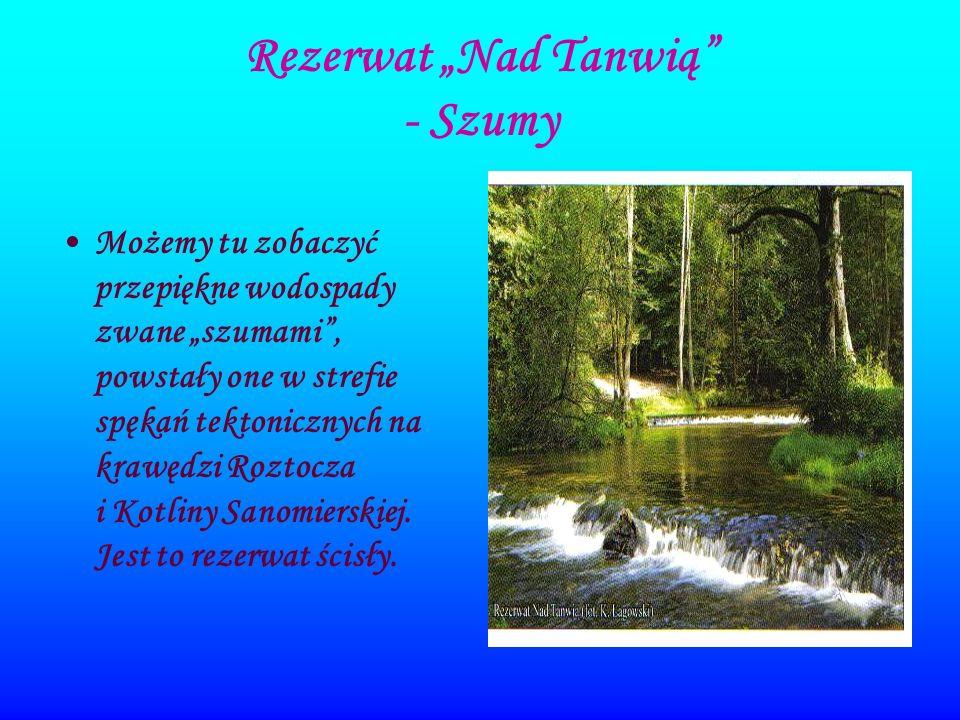 Rezerwat Nad Tanwią - Szumy Możemy tu zobaczyć przepiękne wodospady zwane szumami, powstały one w strefie spękań tektonicznych na krawędzi Roztocza i