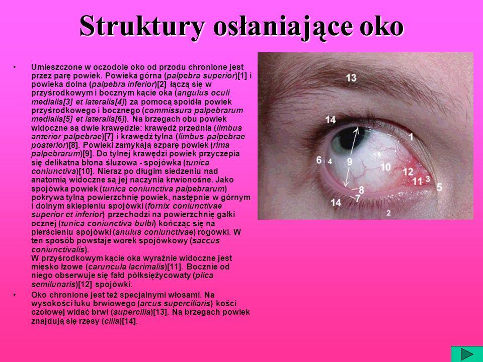 Struktury osłaniające oko Umieszczone w oczodole oko od przodu chronione jest przez parę powiek. Powieka górna (palpebra superior)[1] i powieka dolna