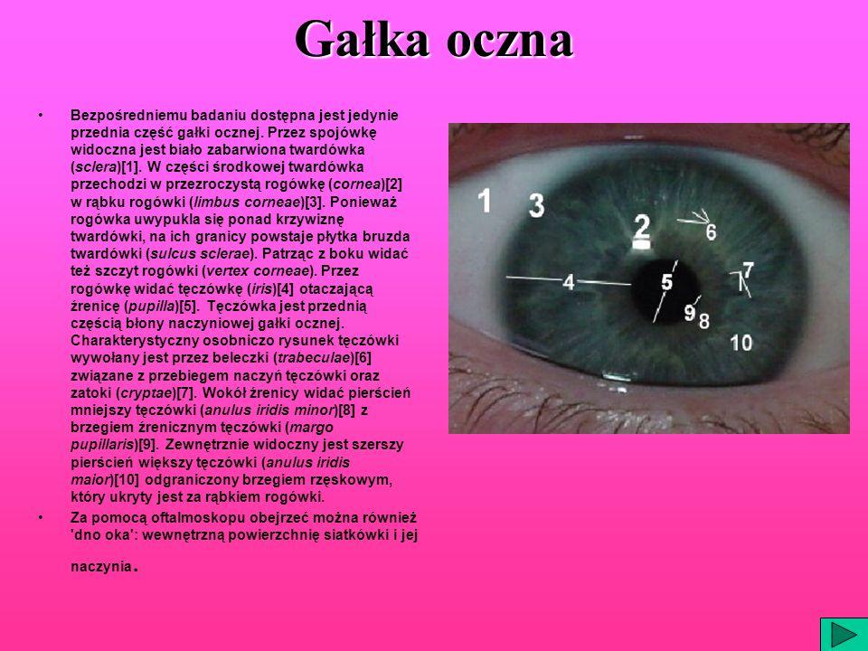 Gałka oczna Bezpośredniemu badaniu dostępna jest jedynie przednia część gałki ocznej. Przez spojówkę widoczna jest biało zabarwiona twardówka (sclera)