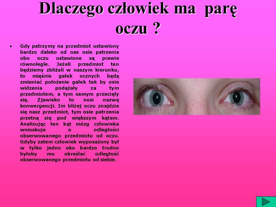 Dlaczego człowiek ma parę oczu ? Gdy patrzymy na przedmiot ustawiony bardzo daleko od nas osie patrzenia obu oczu ustawione są prawie równolegle. Jeże