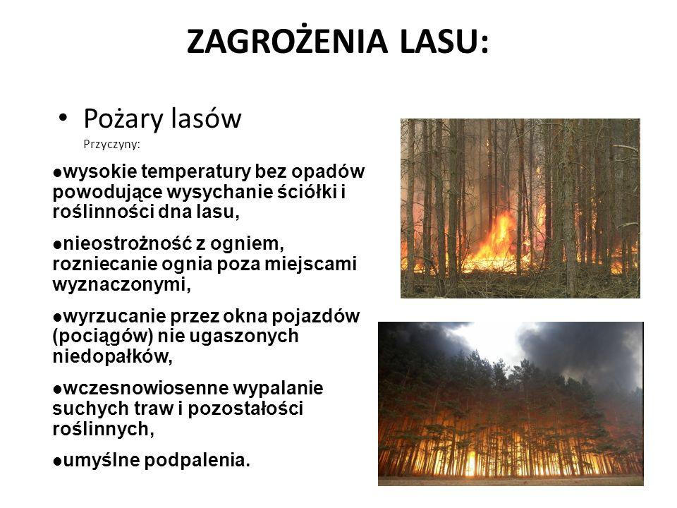 ZAGROŻENIA LASU: Pożary lasów Przyczyny: wysokie temperatury bez opadów powodujące wysychanie ściółki i roślinności dna lasu, nieostrożność z ogniem, rozniecanie ognia poza miejscami wyznaczonymi, wyrzucanie przez okna pojazdów (pociągów) nie ugaszonych niedopałków, wczesnowiosenne wypalanie suchych traw i pozostałości roślinnych, umyślne podpalenia.