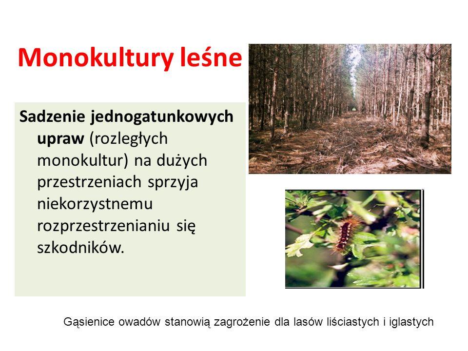 Monokultury leśne Sadzenie jednogatunkowych upraw (rozległych monokultur) na dużych przestrzeniach sprzyja niekorzystnemu rozprzestrzenianiu się szkodników.