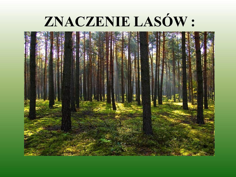 Są naturalnym środowiskiem dla wielkiej liczby gatunków roślin i zwierząt. wiewiórka borowik sosna