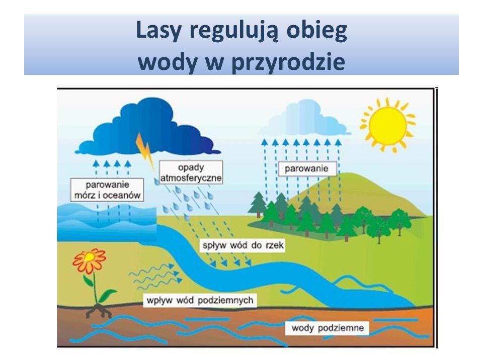 WODĘ, Lasy chronią gleby przed zniszczeniem przez: SŁOŃCE, DZIAŁALNOŚĆ CZŁOWIEKA, SIŁĘ GRAWITACJI.