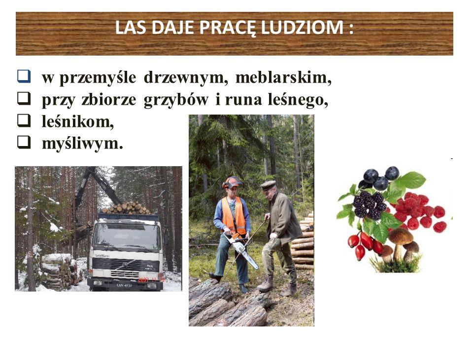 LAS DAJE PRACĘ LUDZIOM : w przemyśle drzewnym, meblarskim, przy zbiorze grzybów i runa leśnego, leśnikom, myśliwym.