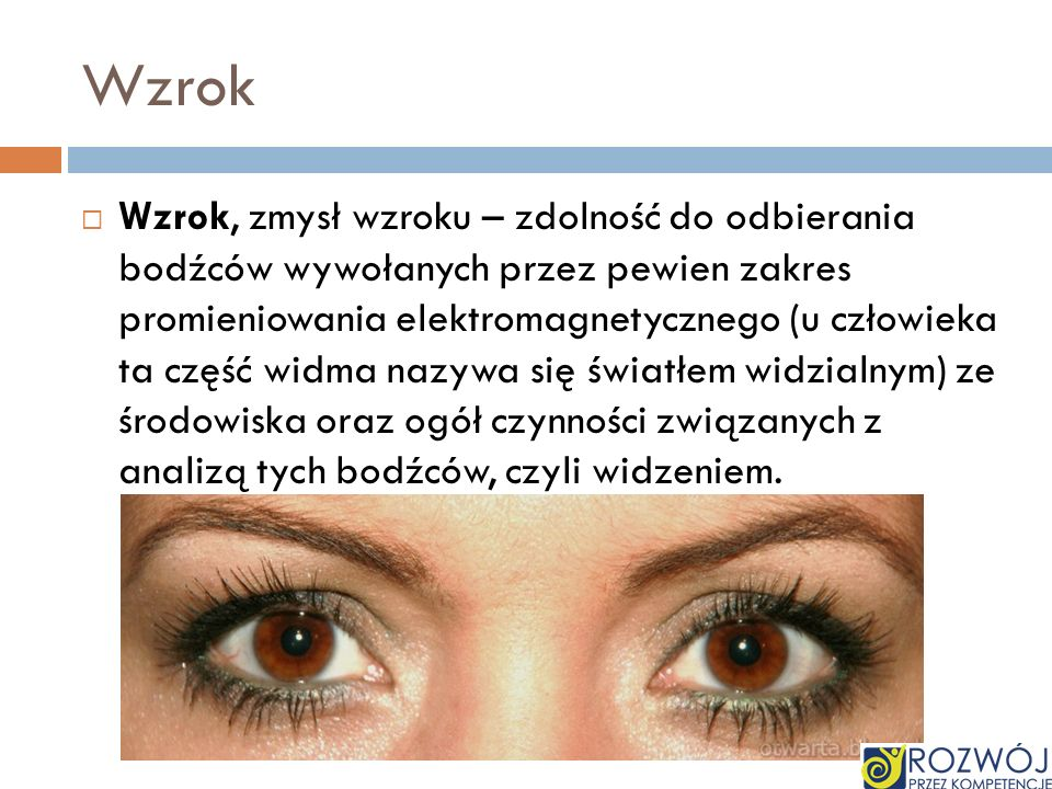 Wzrok Wzrok, zmysł wzroku – zdolność do odbierania bodźców wywołanych przez pewien zakres promieniowania elektromagnetycznego (u człowieka ta część wi