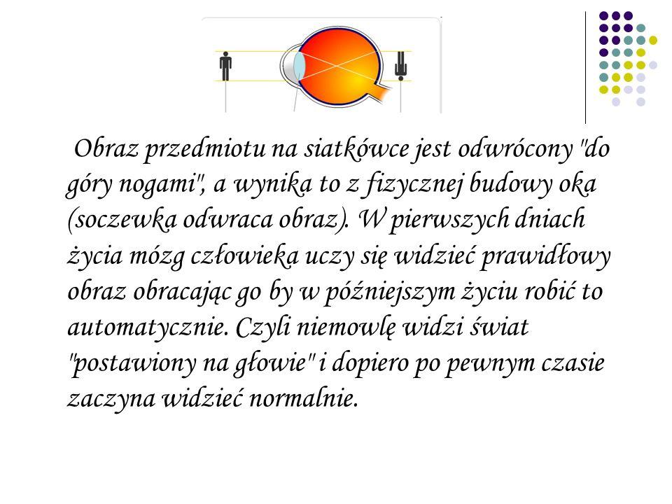 Obraz przedmiotu na siatkówce jest odwrócony