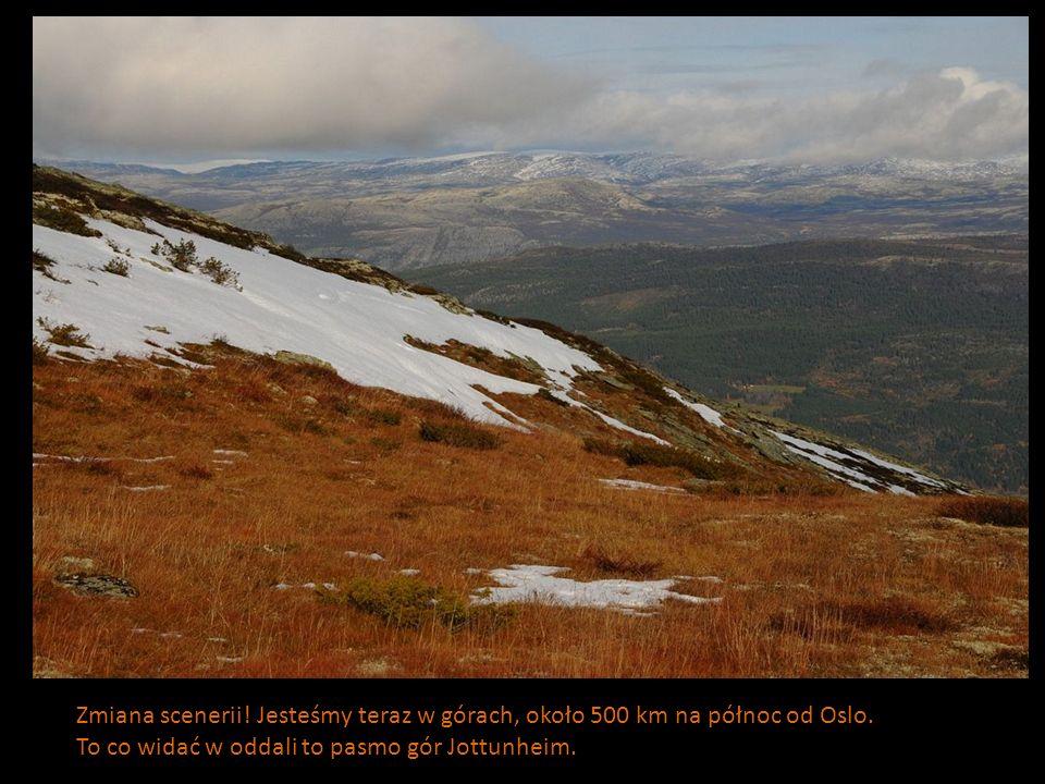 Zmiana scenerii! Jesteśmy teraz w górach, około 500 km na północ od Oslo. To co widać w oddali to pasmo gór Jottunheim.