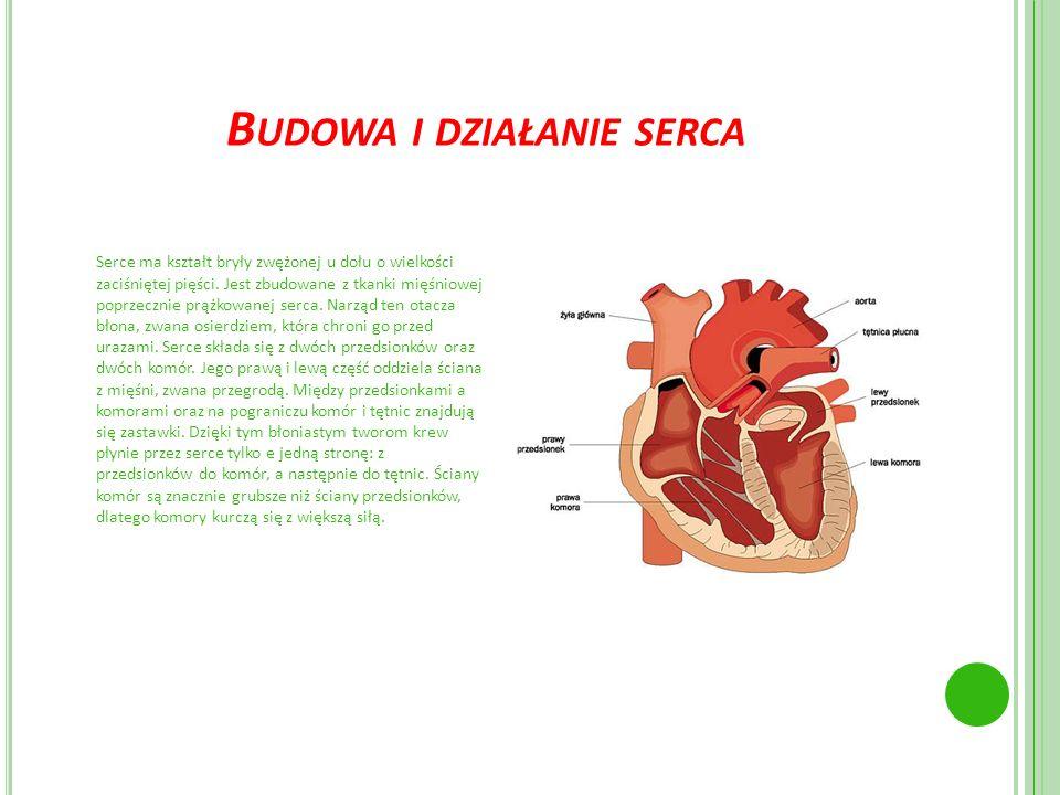 B UDOWA I DZIAŁANIE SERCA Serce ma kształt bryły zwężonej u dołu o wielkości zaciśniętej pięści. Jest zbudowane z tkanki mięśniowej poprzecznie prążko