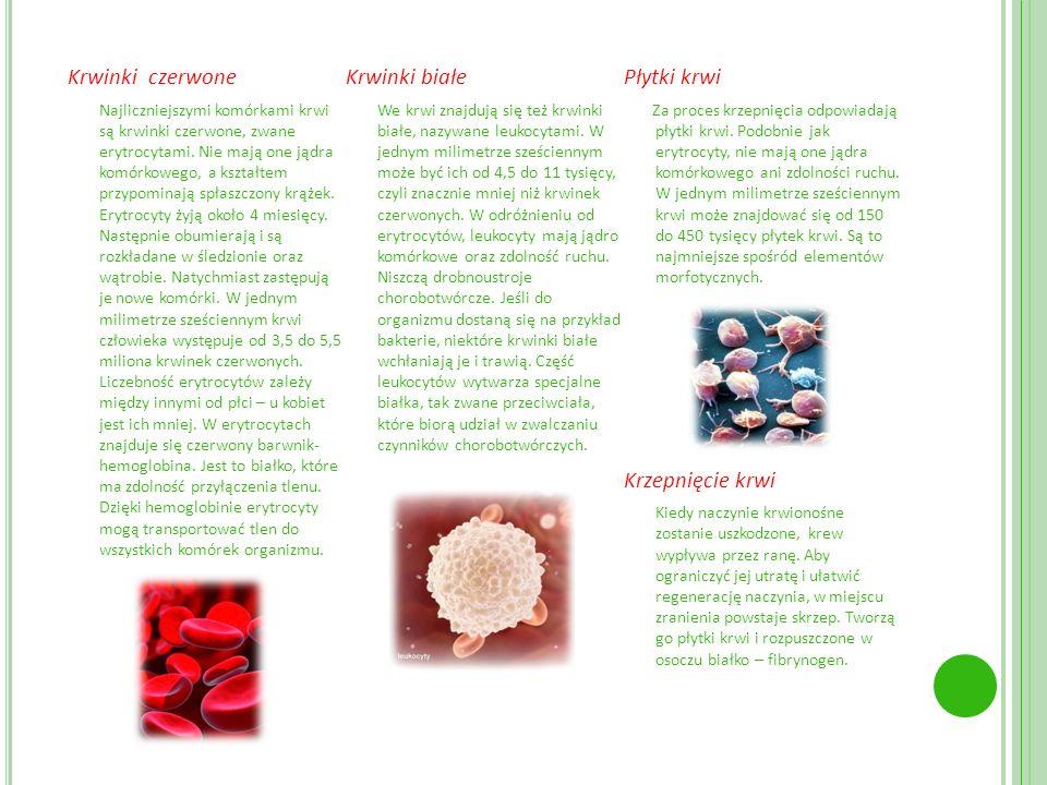 . Krwinki czerwone Najliczniejszymi komórkami krwi są krwinki czerwone, zwane erytrocytami. Nie mają one jądra komórkowego, a kształtem przypominają s
