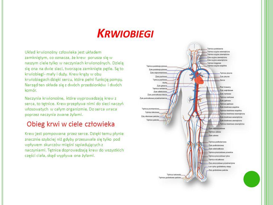 K RWIOBIEGI Układ krwionośny człowieka jest układem zamkniętym, co oznacza, że krew porusza się w naszym ciele tylko w naczyniach krwionośnych. Dzielą