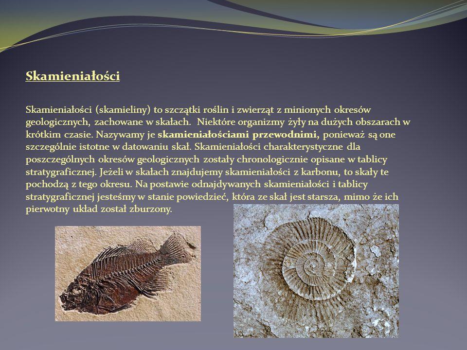 Skamieniałości Skamieniałości (skamieliny) to szczątki roślin i zwierząt z minionych okresów geologicznych, zachowane w skałach. Niektóre organizmy ży