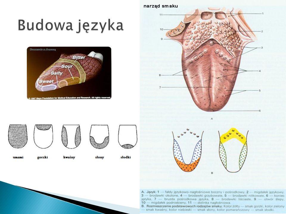 Celem doświadczenia było określenie czy receptory dotyku są równomiernie rozmieszczone w skórze różnych części ciała.