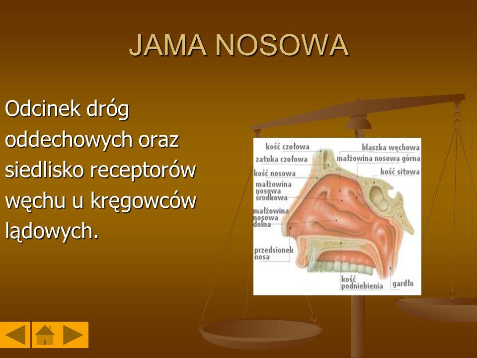 JAMA NOSOWA Odcinek dróg oddechowych oraz siedlisko receptorów węchu u kręgowców lądowych.