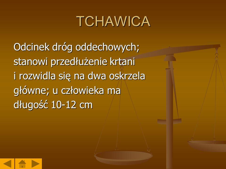 TCHAWICA Odcinek dróg oddechowych; stanowi przedłużenie krtani i rozwidla się na dwa oskrzela główne; u człowieka ma długość 10-12 cm