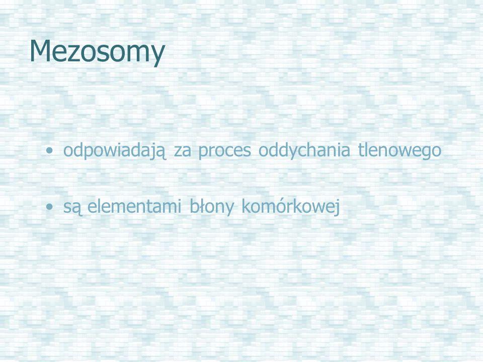 Mezosomy odpowiadają za proces oddychania tlenowego są elementami błony komórkowej