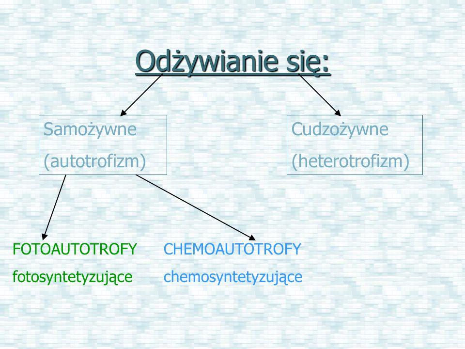 Odżywianie się: Samożywne (autotrofizm) Cudzożywne (heterotrofizm) FOTOAUTOTROFY fotosyntetyzujące CHEMOAUTOTROFY chemosyntetyzujące