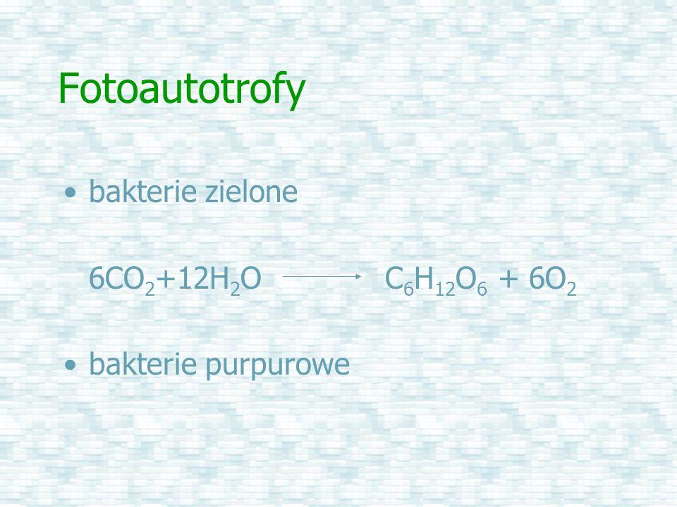 Fotoautotrofy bakterie zielone 6CO 2 +12H 2 O C 6 H 12 O 6 + 6O 2 bakterie purpurowe